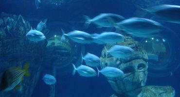 Vous allez découvrir l'Aquarium Sea Life Val d'Europe près de Paris ! Réserver votre place de parking à l'avance! in Parkingsdeparis